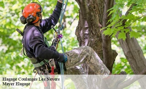 Elagage  coulanges-les-nevers-58660 Mayer Elagage
