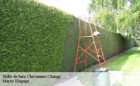 Taille de haie  chevannes-changy-58420