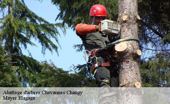 Abattage d'arbres  chevannes-changy-58420